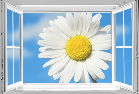 View through a white open window to a big marguerite on blue sky